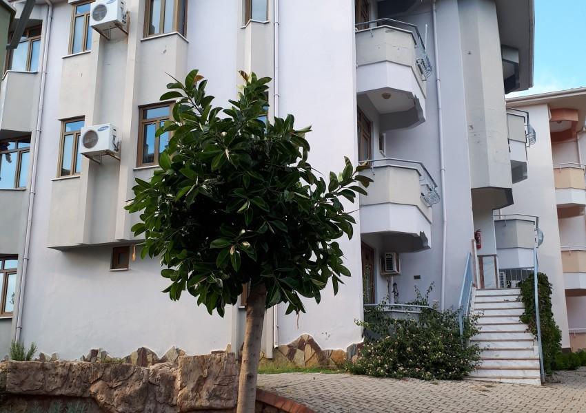 A13, A16, Lejlighed A15, Lejlighed A13, lejligheder i Alanya, familielejligheder i Alanya, feriebolig i varme lande, bedste steder at købe ferie bolig, ferie bolig i Tyrkiet